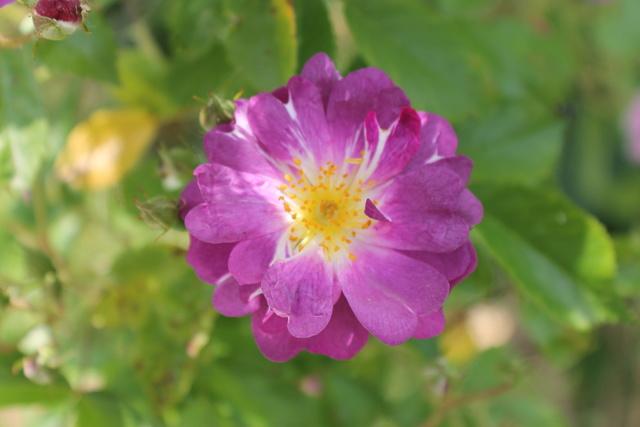 Floraisons du mois de Mai - Page 24 Img_4824