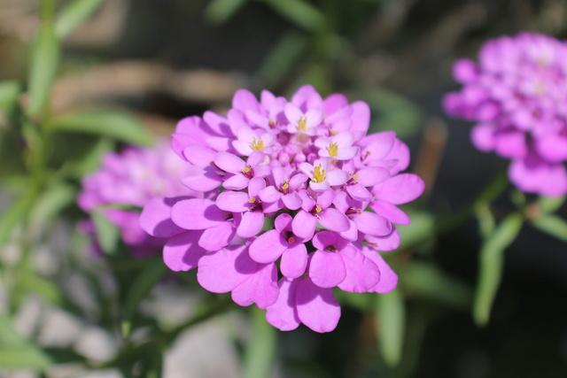 Floraisons du mois de Mai - Page 24 Img_4850