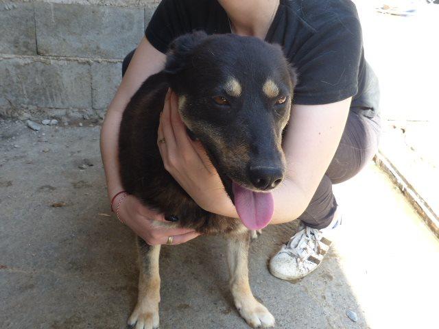 elena - ELENA, X BA et beauceron, née 04/2016 environ (PIATRA FOURRIERE) Retour adoption - Page 3 Recei575