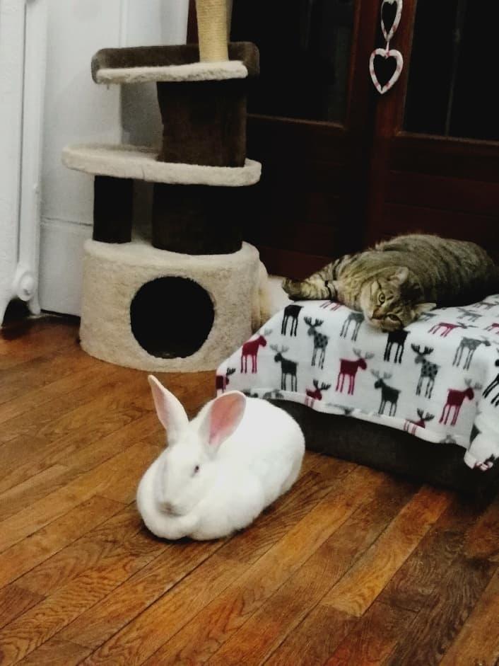 [ADOPTEE] Ebène, lapine réhabilitée de laboratoire 29340910
