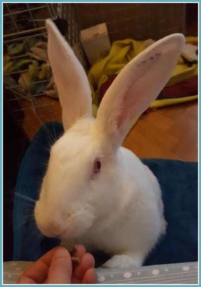 [ADOPTEE] Hope, lapine réhabilitée de laboratoire 60120710