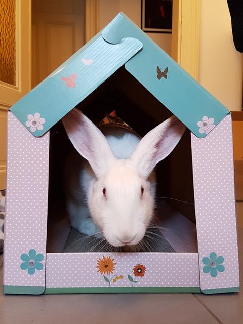 [ADOPTEE] Gaïa, lapine réhabilitée de laboratoire Gaia2012
