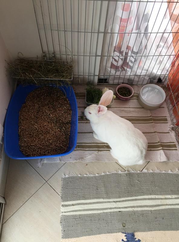 [ADOPTEE] Hope, lapine réhabilitée de laboratoire Hopeim11