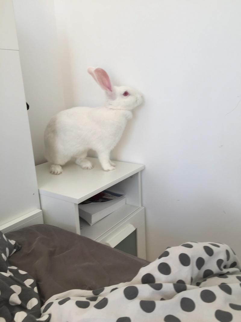 [ADOPTEE] Joy, lapine réhabilitée de laboratoire Img_7110