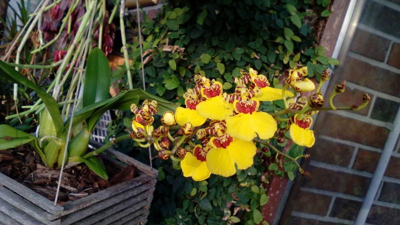 Orchideen 3 (fortlaufende Seiten 300 bis 400) - Seite 3 01_02_12