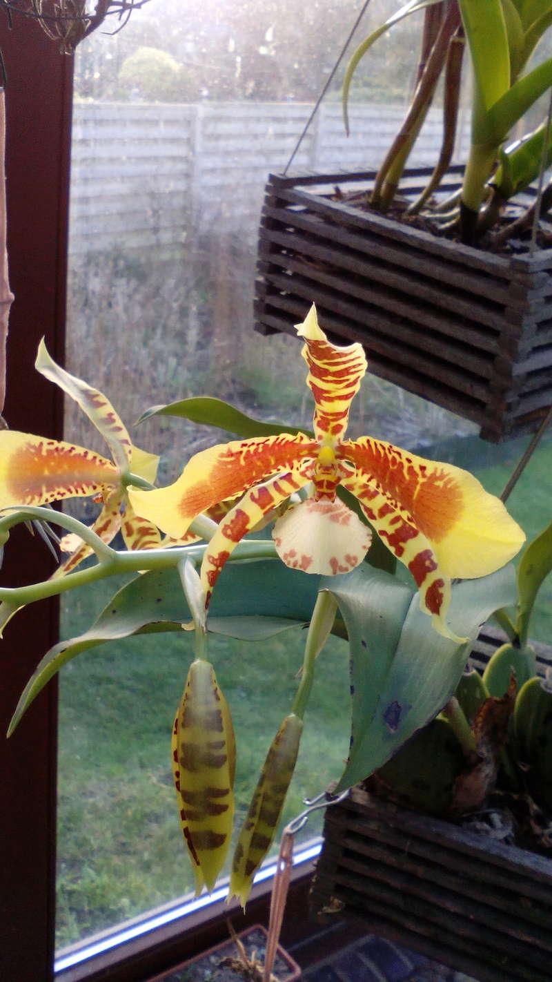Orchideen 3 (fortlaufende Seiten 300 bis 400) - Seite 3 01_02_13