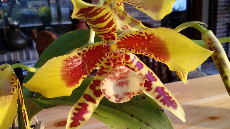 Orchideen 3 (fortlaufende Seiten 300 bis 400) - Seite 3 01_02_14