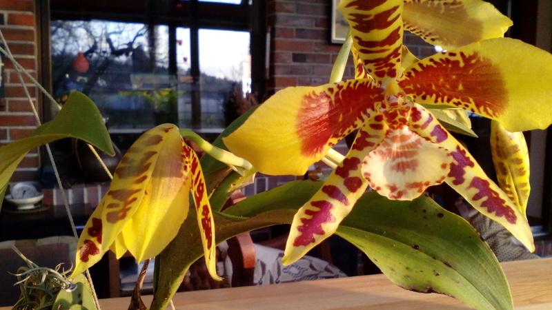 Orchideen 3 (fortlaufende Seiten 300 bis 400) - Seite 3 01_02_17