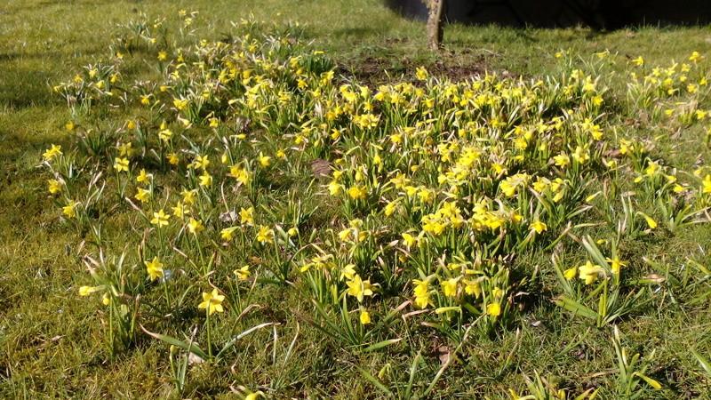 Erste Frühlingsboten im Garten und in Wald und Flur - Seite 63 02_04_12