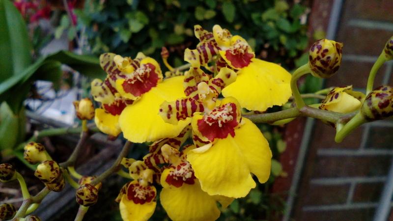 Orchideen 2 (fortlaufende Seiten 200 bis 300) - Seite 98 19_01_10