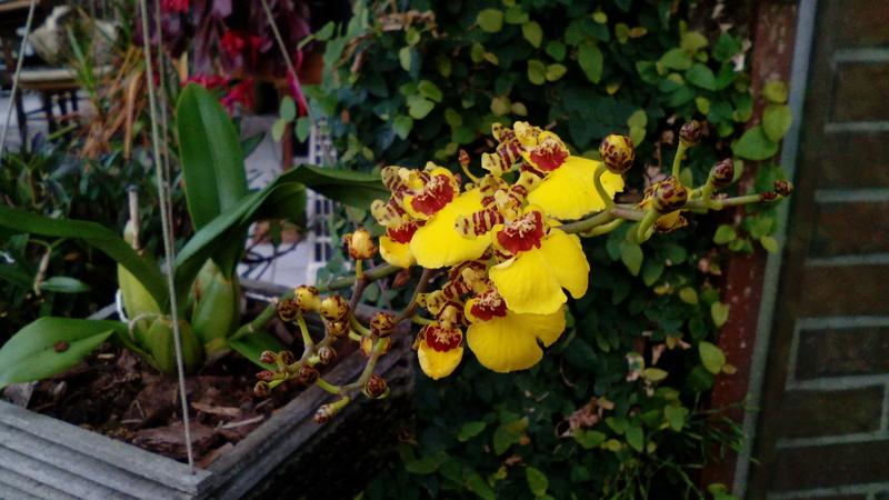 Orchideen 2 (fortlaufende Seiten 200 bis 300) - Seite 98 19_01_11