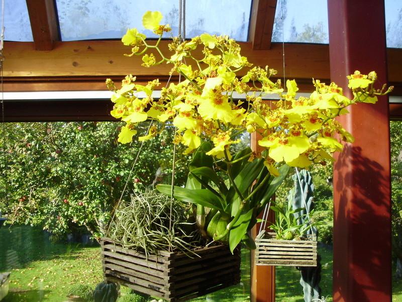 Orchideen 2 (fortlaufende Seiten 200 bis 300) - Seite 98 Pa090212