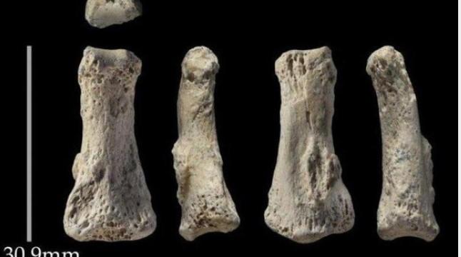 وجود بقايا إنسان بالسعودية قبل 85 ألف عام 310