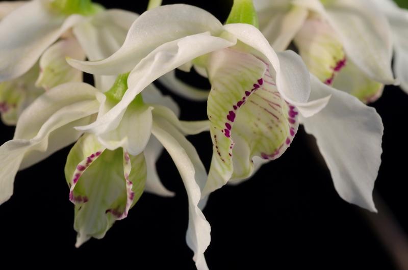 Bilder verkleinern und hochladen Orchid26