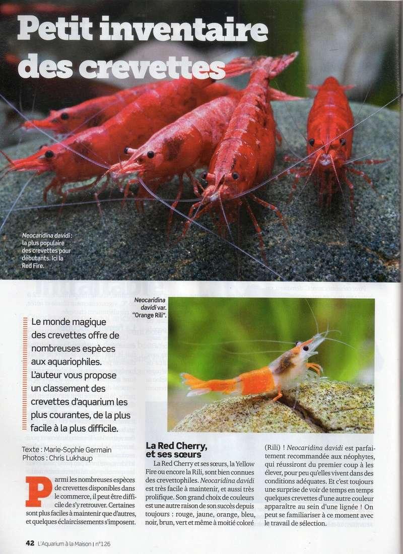 Petit inventaire des crevettes Img07710