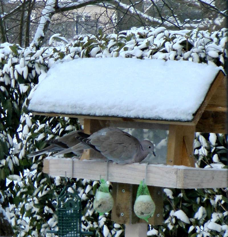 L'hiver au jardin - Page 2 Tourte10
