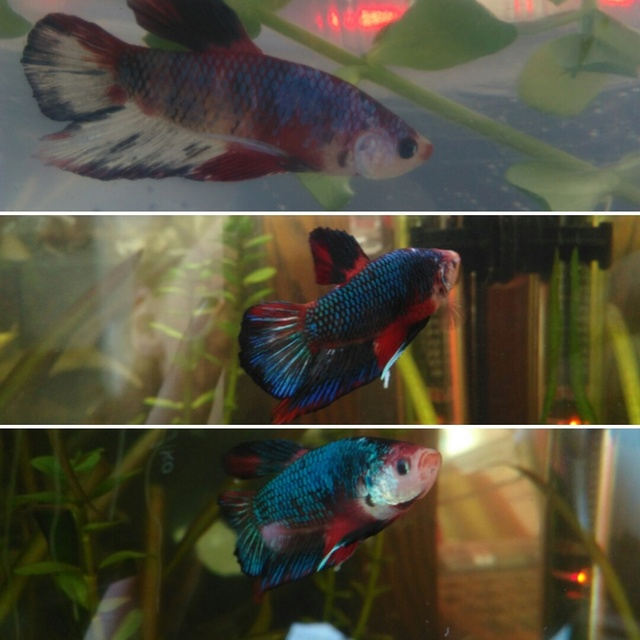 Mon tout premier aquarium Tumblr10