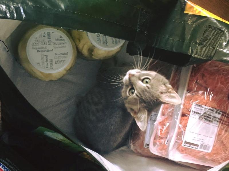 Le parchemin d'une viande saignante en balade /Finit/ 20604310