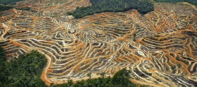 Ce qu'il faut savoir sur l'huile de palme Huile10