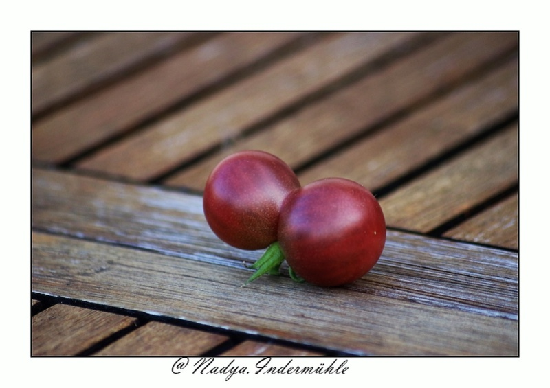 La tomate Cadrim17