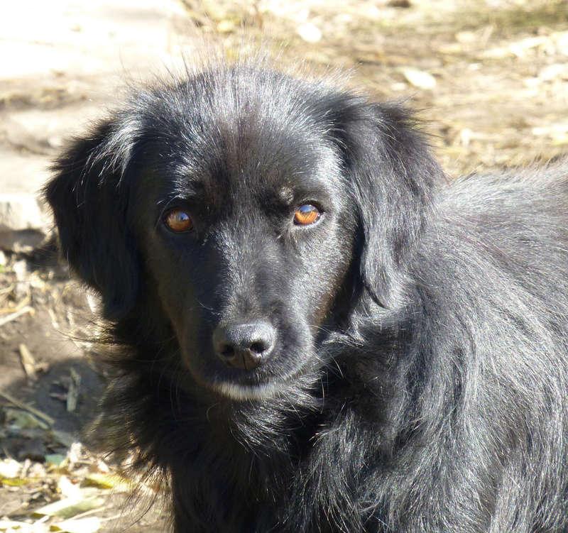 djina - DJINA X-F, taille moyenne, env. 18 kg, née 2012 Ancien de Backa (BELLA) Prête à voyager Djina110