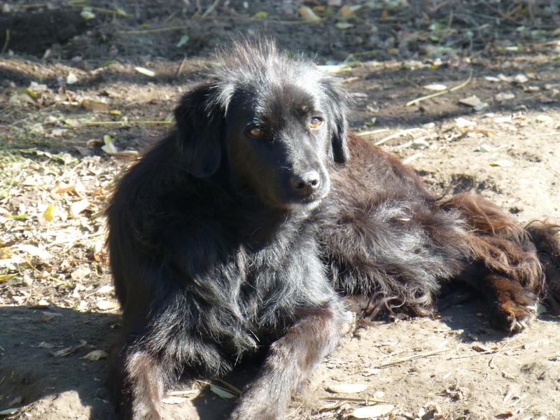 djina - DJINA X-F, taille moyenne, env. 18 kg, née 2012 Ancien de Backa (BELLA) Prête à voyager Djina210