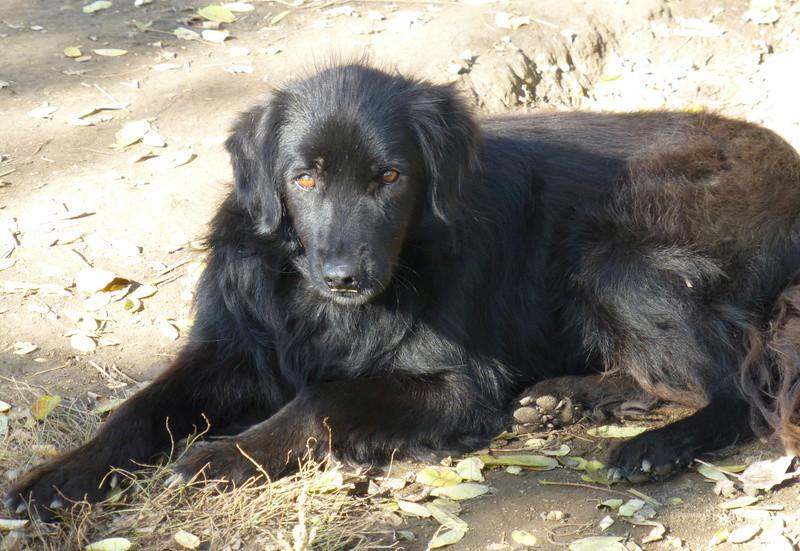 djina - DJINA X-F, taille moyenne, env. 18 kg, née 2012 Ancien de Backa (BELLA) Prête à voyager Djina310