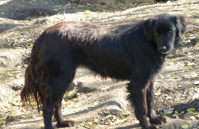 djina - DJINA X-F, taille moyenne, env. 18 kg, née 2012 Ancien de Backa (BELLA) Prête à voyager Djina410