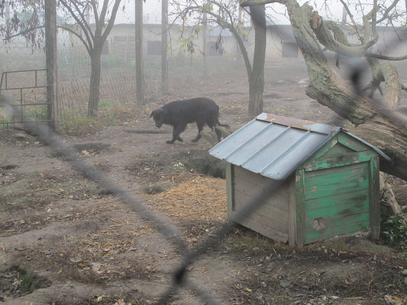 djina - DJINA X-F, taille moyenne, env. 18 kg, née 2012 Ancien de Backa (BELLA) Prête à voyager Img_8533