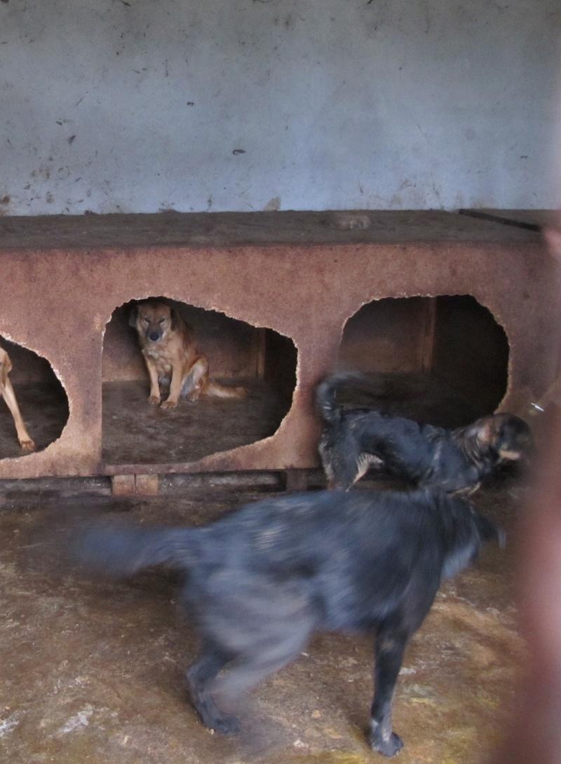 JUSTIN M-X labrador noir, taille moyenne, env. 25 kg, né 2013 Ex-Backa(BELLA)PRET/ BESOIN DE SOINS Lb410
