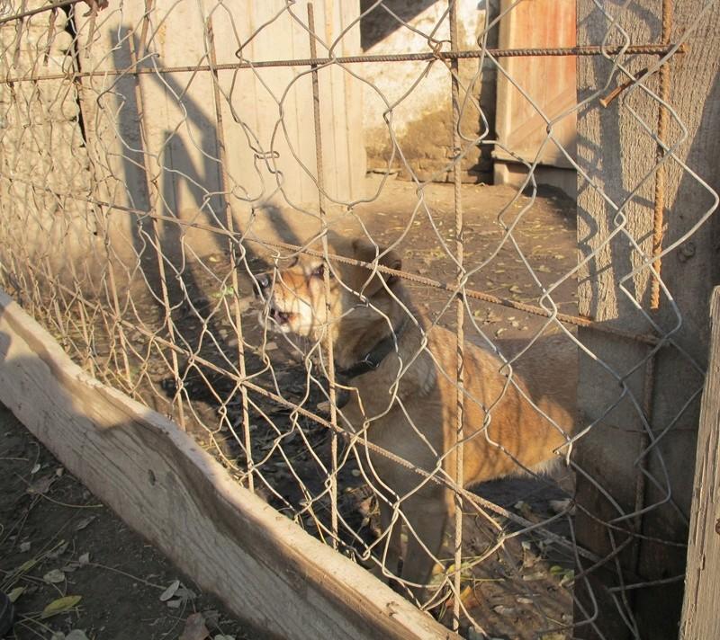 WIKA, X-F, taille moyenne, env.  12-13 kg, née 2006 - Ancien de Backa (BELLA) Wika_410