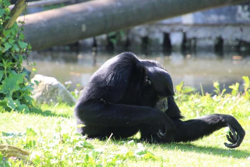 zoo de LILLE Img_0012