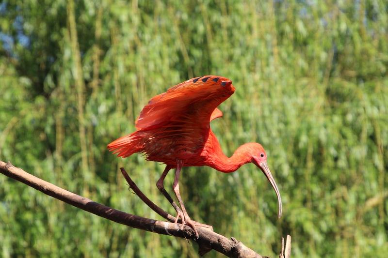 zoo de LILLE Img_0017