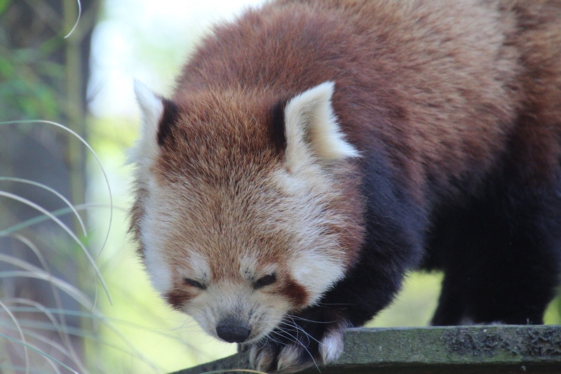 zoo de LILLE Img_0023