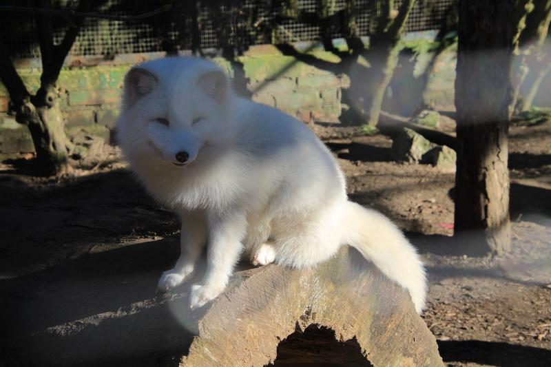 zoo de LILLE Img_8910