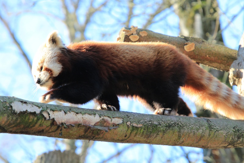 zoo de LILLE Img_8911