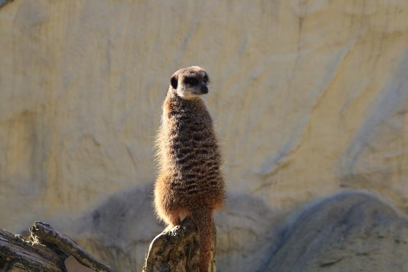 zoo de LILLE Img_8915