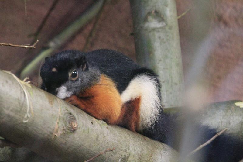 zoo de LILLE Img_8918