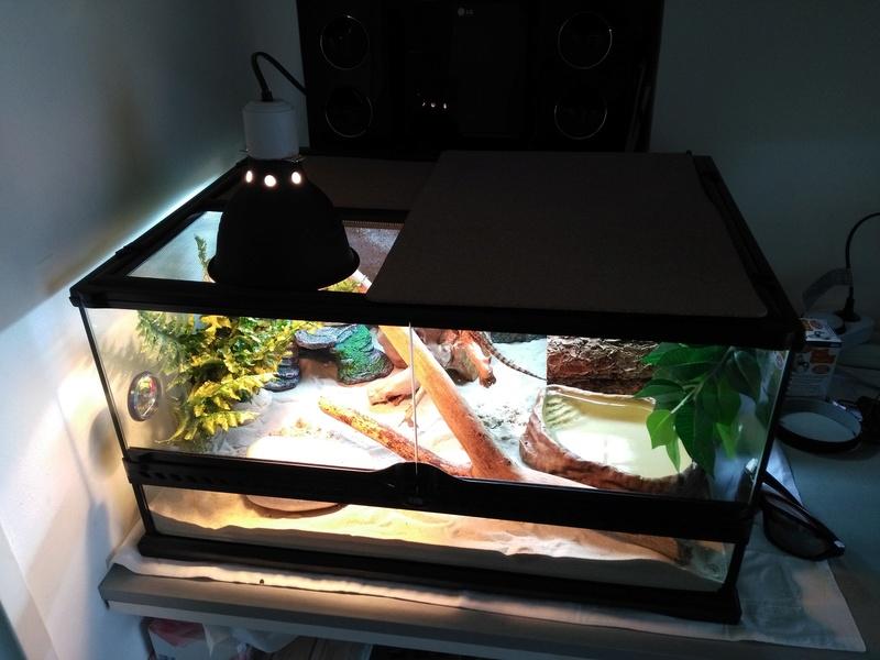 Le terrarium de Spyro Img_2015
