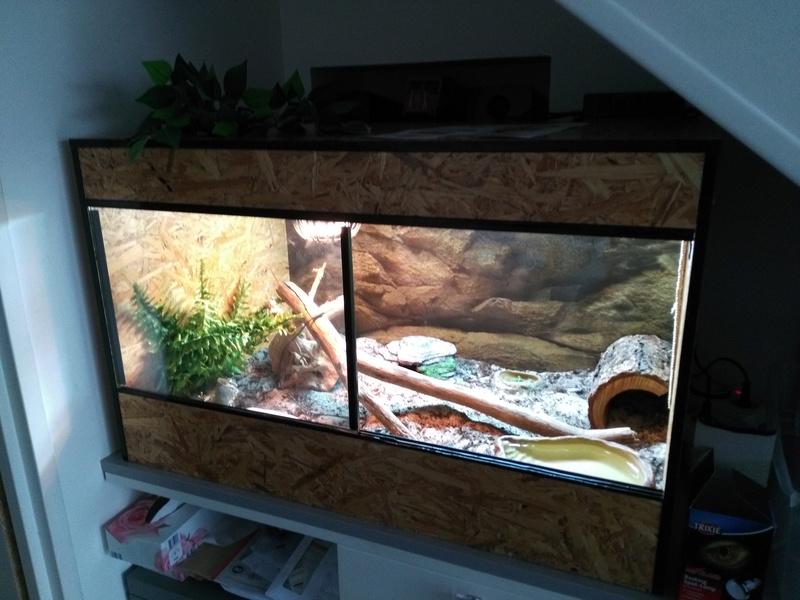 Le terrarium de Spyro Img_2018