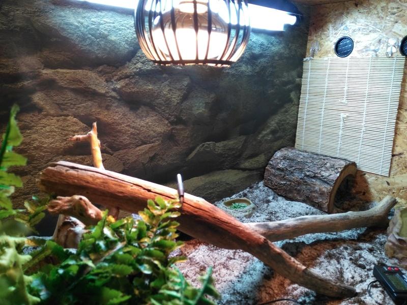 Le terrarium de Spyro Img_2021