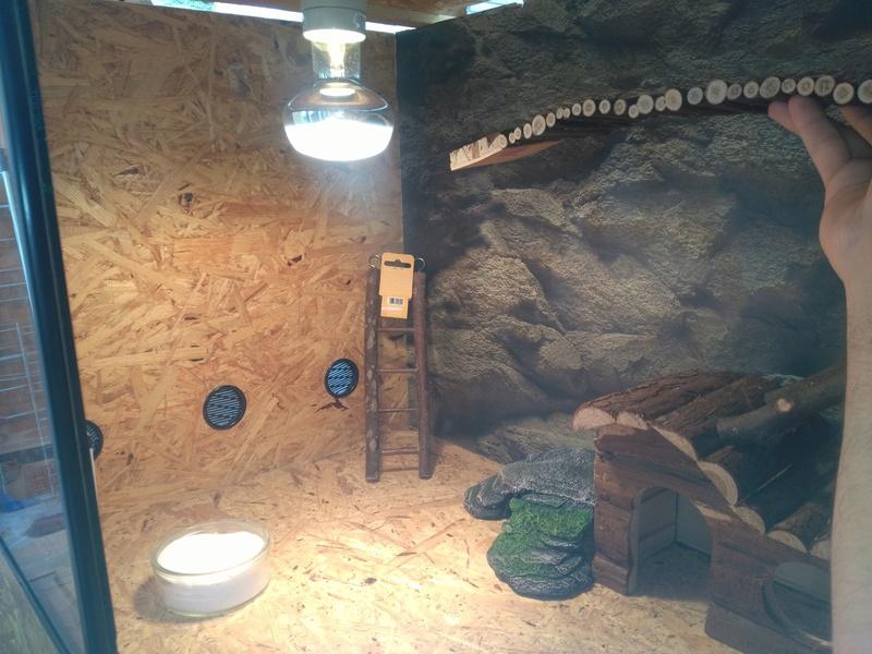 Le terrarium de Spyro Img_2024