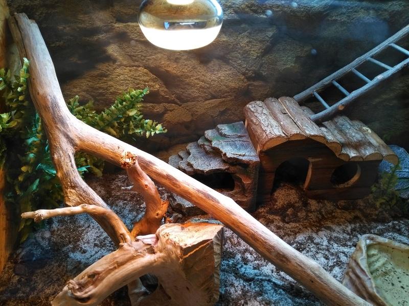 Le terrarium de Spyro Img_2035
