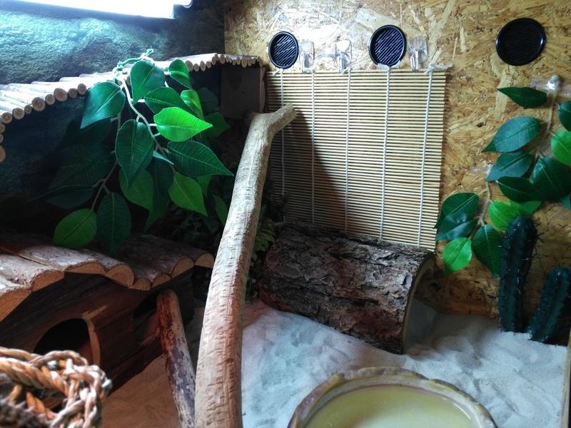 Le terrarium de Spyro - Page 2 Img_2147
