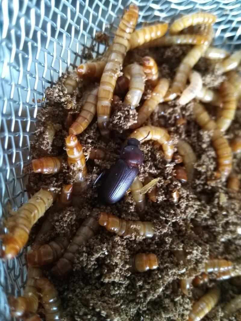 Régime d'insecte - Page 2 Img_2178