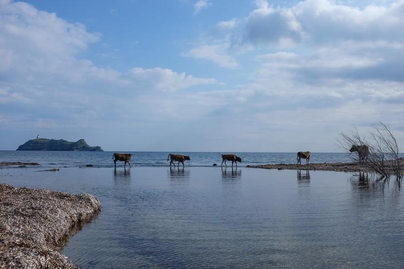 De retour de 10 jours en Corse Dscf3313