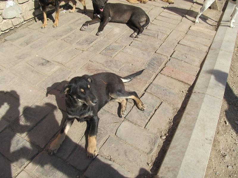 srechko - SRECHKO - Né avril 2017 - 17 kg - Un petit chien parfait (BELLA) - Prêt à voyager en nov 2020 S111