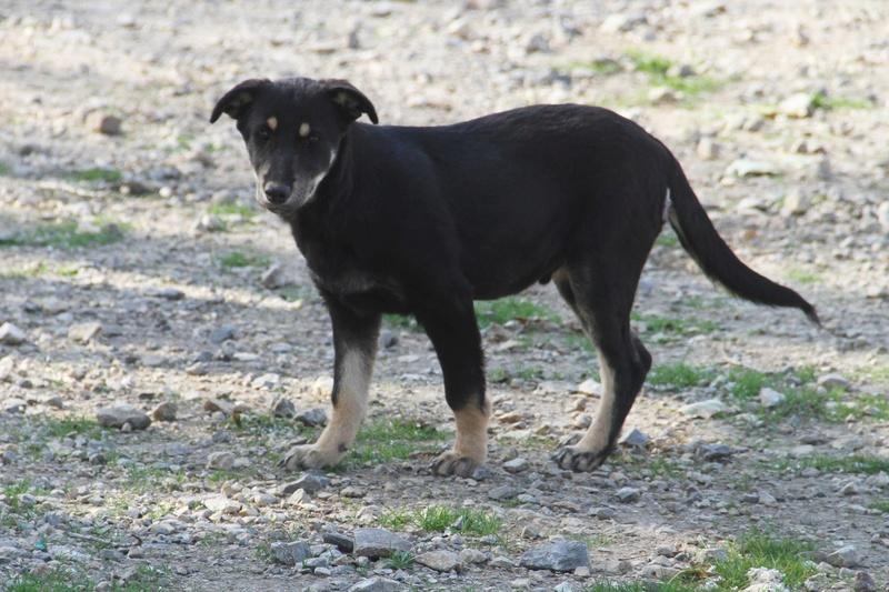 srechko - SRECHKO - Né avril 2017 - 17 kg - Un petit chien parfait (BELLA) - Prêt à voyager en nov 2020 S211