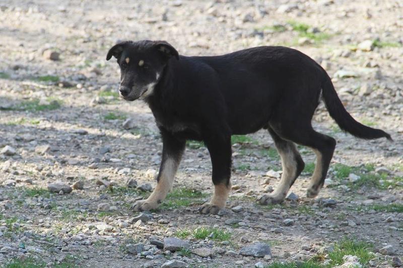 srechko - SRECHKO - Né avril 2017 - 17 kg - Un petit chien parfait (BELLA) - Prêt à voyager en nov 2020 S310