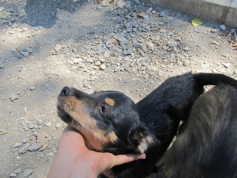 srechko - SRECHKO - Né avril 2017 - 17 kg - Un petit chien parfait (BELLA) - Prêt à voyager en nov 2020 S410